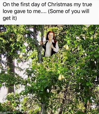 Just in time for Xmas – Danny in a tree? – Danny Bonaduce ...
